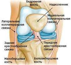 Износ суставов человеческого тела hills для суставов