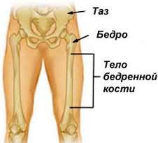 Часть нижней конечности человека между тазобедренным и коленным суставом crfxfnm борщенко суставы без боли